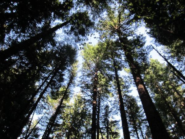 Mt Defiance Trail 413 Forest Picture taken by Joel Bornzin