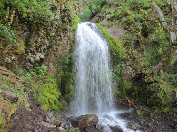 Mt Defiance Trail 413 Picture taken by Joel Bornzin