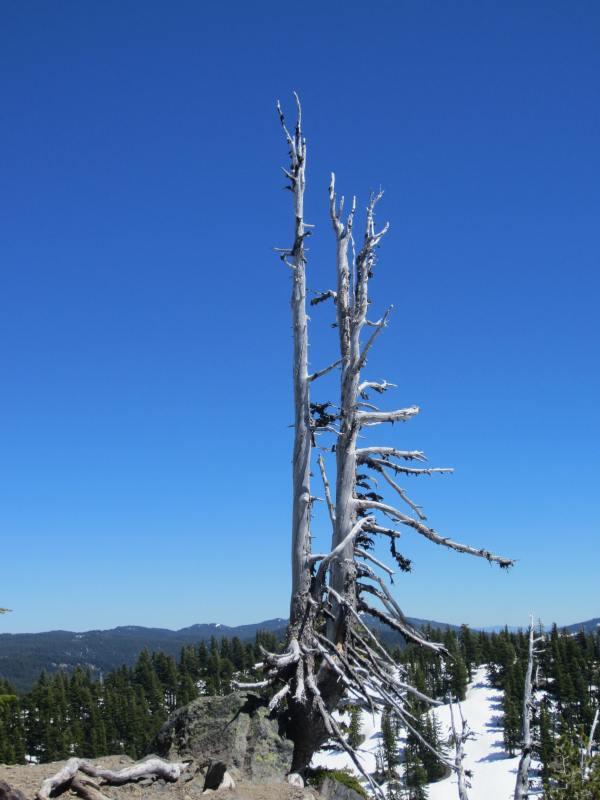 Camp Tree - Picture Taken by Joel Bornzin