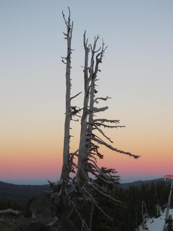 Camp Tree Dusk - Picture Taken by Joel Bornzin