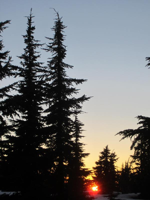 Camp Trees at Dusk - Picture Taken by Joel Bornzin