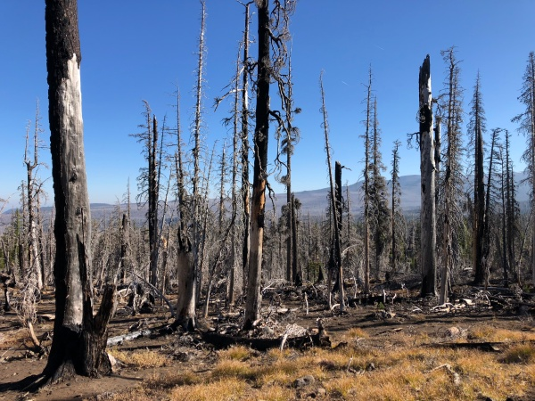 Burn Area - Camp Lake Trail 4074 – Three Sisters Wilderness, Oregon