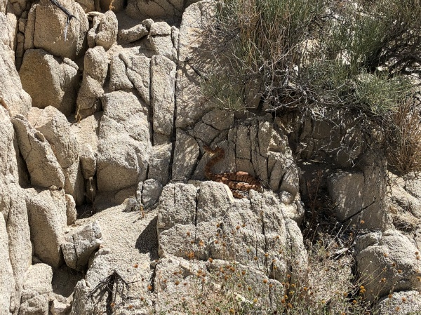 Wildlife on the Boy Scout Trail to Willow Hole - Wonderland of Rocks - May 2019