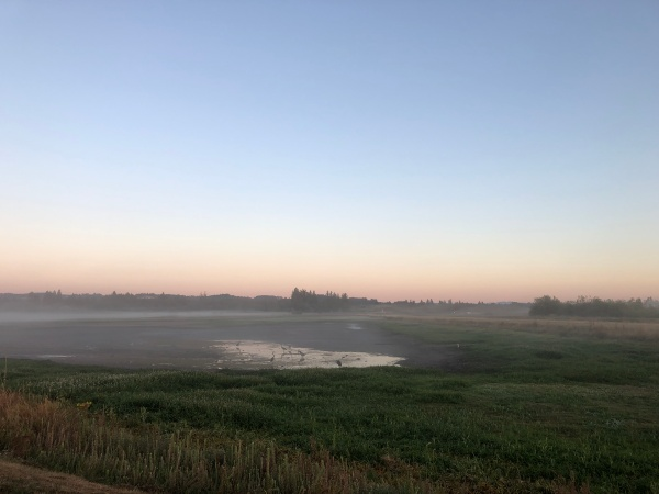 Morning on the refuge - birds gather