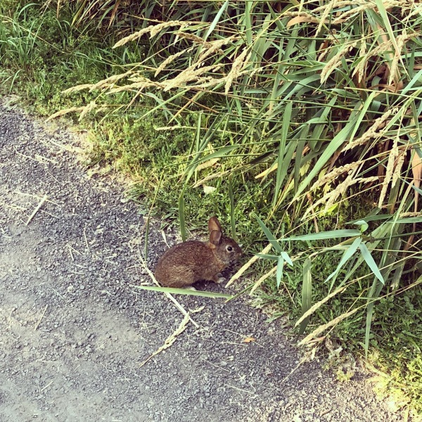 Bunny sighting on the trail